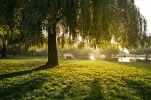Summer evening in Broomfield Park